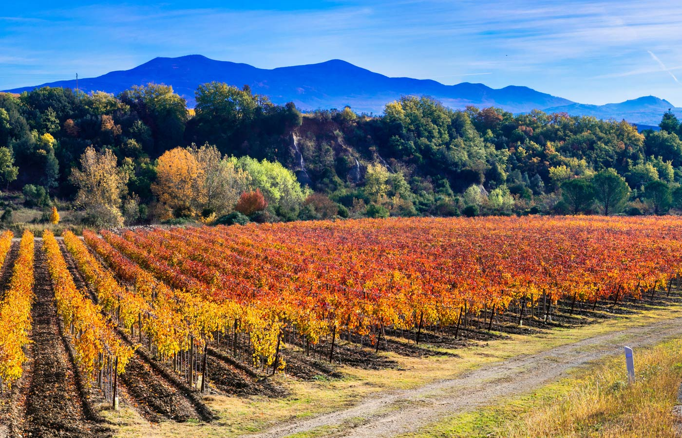 What to do in Montepulciano in autumn